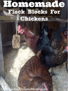 DIY Homemade Flock Blocks For Chickens