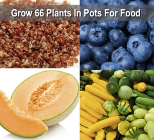 Growing Your Food In Pots: 66 Plants That Grow In Containers