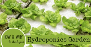 How And Why To Start A Hydroponic Garden System