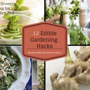 Indoor Home Garden: 12 Delectable Edibles You Can Grow Indoors