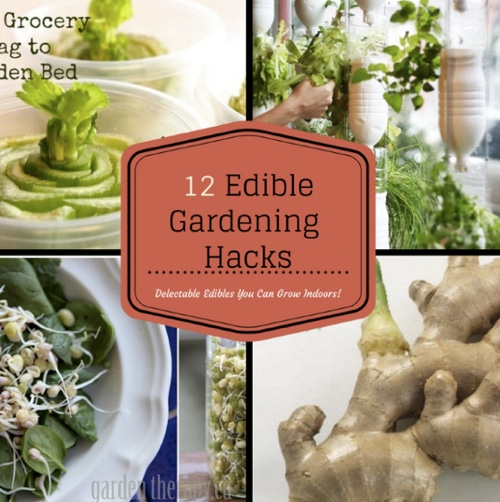 Indoor-Home-Garden-12-Delectable-Edibles-You-Can-Grow-Indoors
