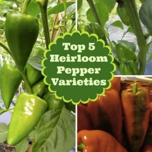 The Best Heirloom Sweet Pepper Varieties