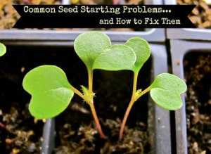 The Most Common Seed Starting Problems & How To Fix Them