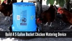 How To Build A Chicken Waterer Using A 5 Gallon Bucket
