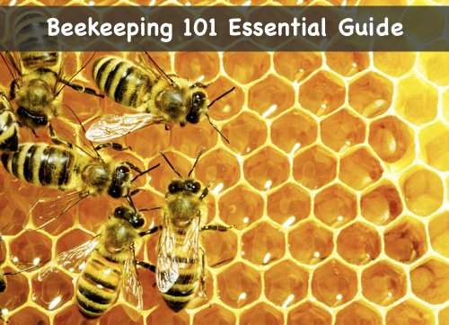 Beekeeping-101-Essential-Guide