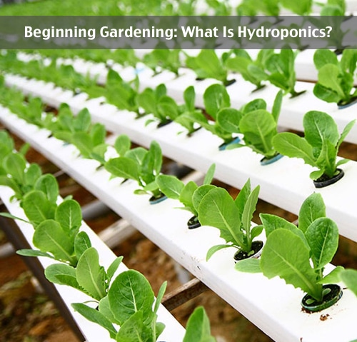 Beginning-Gardening-What-Is-Hydroponics