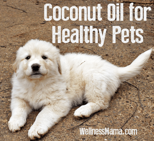 Benefits-Of-Coconut-Oil-For-Pets