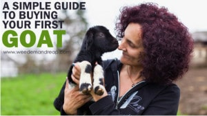 Complete Guide To Buying Your First Goat