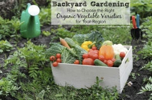 Gardening Tips! How To Choose The Right Organic Vegetable Varieties For Your Region