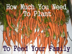 Gardening Tips To Determine How Much Should You Plant To Feed Your Family