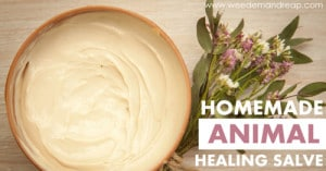 Homemade Animal Healing Salve