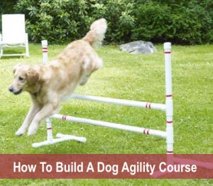 How To Build A Dog Agility Course