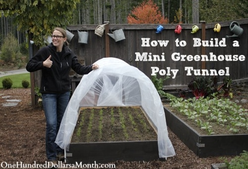 How-To-Build-A-Mini-Greenhouse-Poly-Tunnel