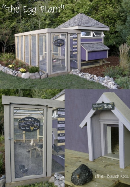 How-To-Build-The-Egg-Plant-Chicken-House