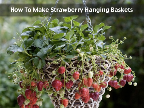 How-To-Make-Strawberry-Hanging-Baskets