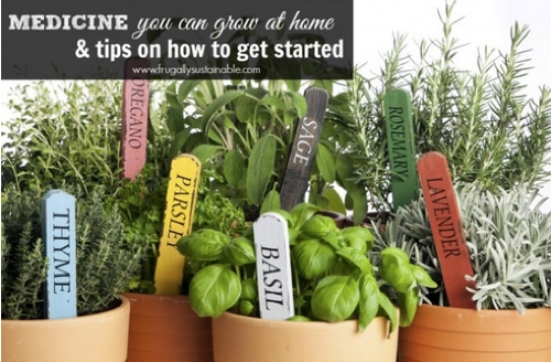 Natural Medicine You Can Grow At Home & Tips To Get Started