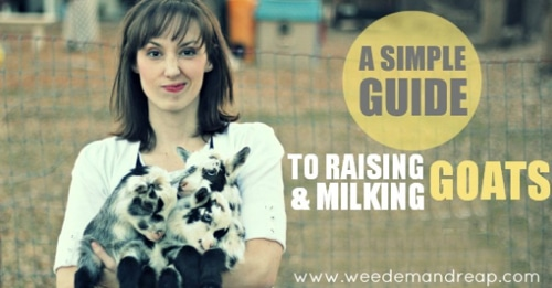 Small Farming: Simple Guide To Raising & Milking Goats