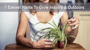 The 7 Easiest Plants To Grow Indoors & Outdoors
