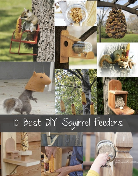 10-Best-DIY-Squirrel-Feeders-And-Speciality