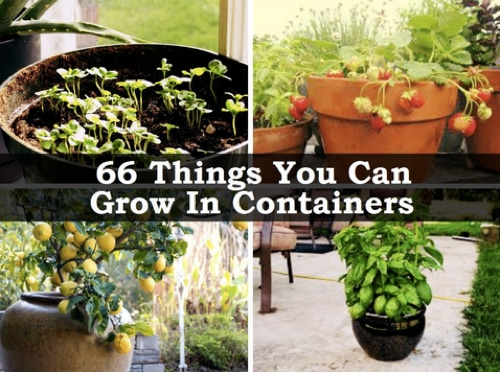 66-Things-You-Can-Grow-In-Containers
