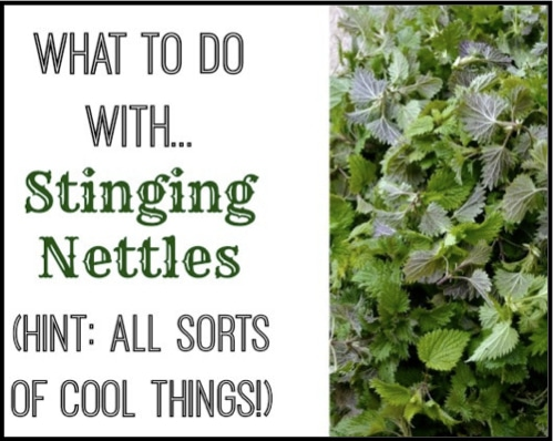 Cool-Things-To-Do-With-Nettles