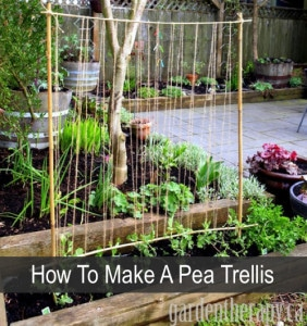 How To Make A Pea Trellis