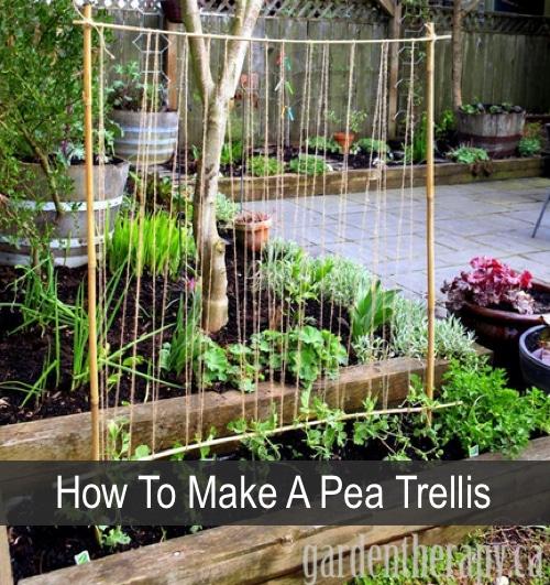 How-To-Make-A-Pea-Trellis
