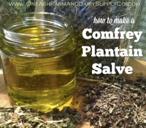 How To Make Comfrey Plantain Salve