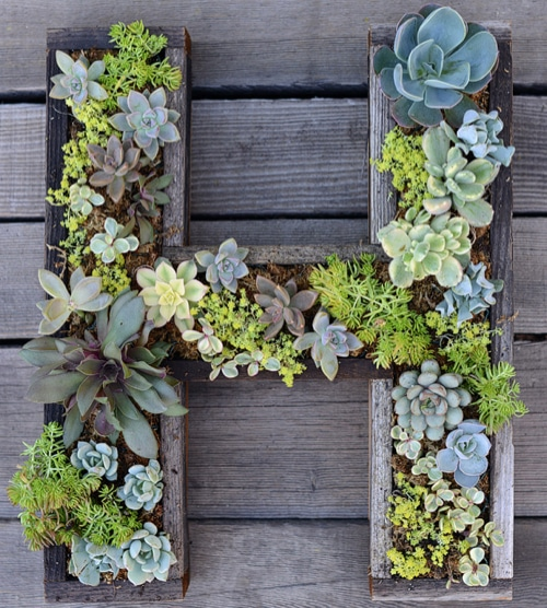 How To Make Wall-Mounted Art With Succulent Letters