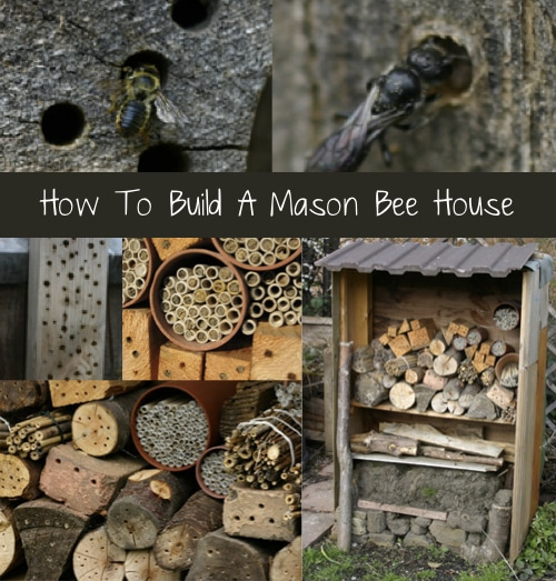 How-to-Build-A-Mason-Bee-House