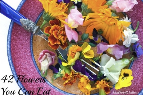 List-Of-42-Flowers-You-Can-Eat