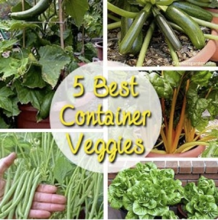 The-5-Best-Outdoor-Container-Vegetables