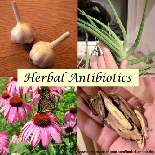 Top-15-Herbal-Antibiotics