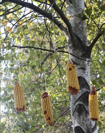 10_best_diy_squirrel_feeders_08