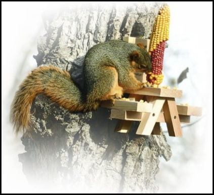 10_best_diy_squirrel_feeders_12