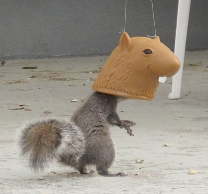 10_best_diy_squirrel_feeders_14