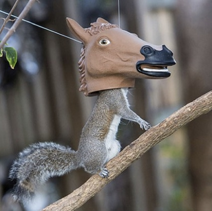 10_best_diy_squirrel_feeders_15