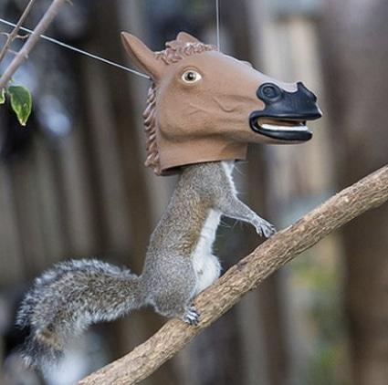 Best Air Freshener >> 10 Best DIY Squirrel Feeders & Speciality - Homestead & Survival