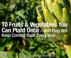 10 Fruits & Vegetables That Regrow Every Year