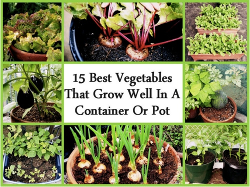15-Best-Vegetables-That-Grow-In-A-Container-Or-Pot