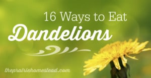 16 Ways To Eat Dandelions