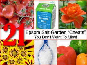 21 Epsom Salt Garden Cheats