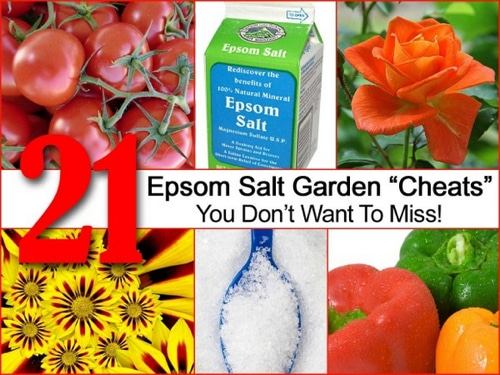 21-Epson-Salt-Garden-Cheats