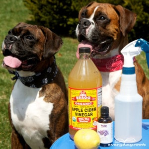 6 Ways To Naturally Prevent Fleas On Dogs