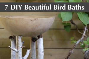 7 DIY Bird Baths
