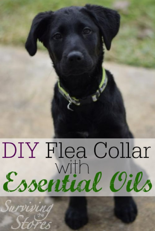 DIY-Flead-Collar-Using-Essential-Oils