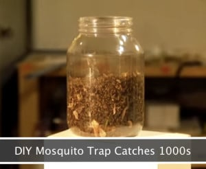 DIY Mosquito Trap That Will Catch 1000s