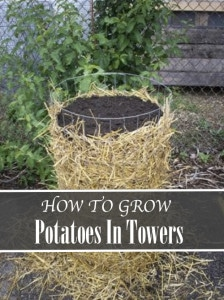 How To Grow Potatoes In Towers