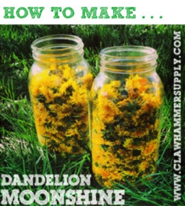 How To Make Dandelion Moonshine