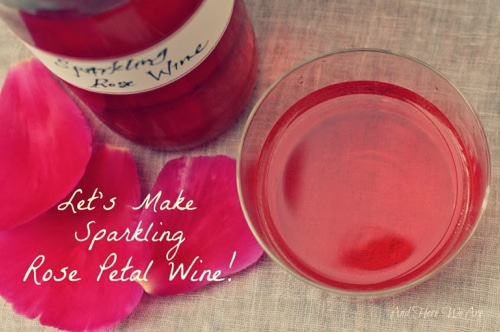 How To Make Sparkling Rose Petal Wine